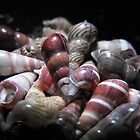 Shells by MandyJ