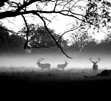 Stags in the Mist by robob