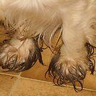 Muddy Paws by Jenny Brice
