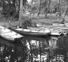 boats at ross castle killarney  by James Cronin