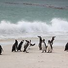 Magellanic Penguins Coming up the Beach by Carole-Anne
