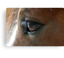 Shire Foals eye, Canvas Print