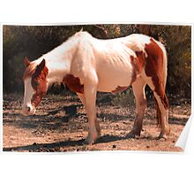 Outback Horse Poster