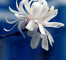 Graceful and Charming by Cynthia Rudzis