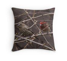 House Finch Pair Throw Pillow