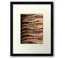 Bark 3 Framed Print