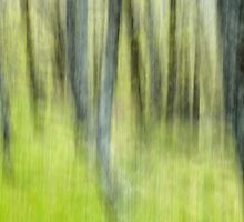 Ghost forest - Natural abstract by Patrick Morand