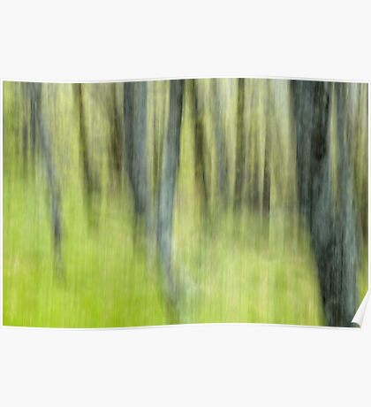 Ghost forest - Natural abstract Poster