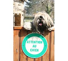 I am all about the attention! Photographic Print