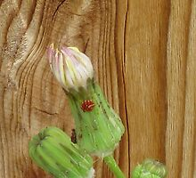 Bugs! by Diana Moya
