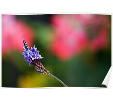 Lavender and Spring Colors Poster