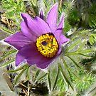 Purple Flower by Finbarr Reilly