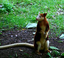 Tree Kangaroo by Erland Howden