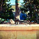 3 Birds by Jakov Cordina
