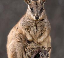 Mum and Joey Rock Wallabies  by Juergen Freund