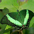 Green Lantern by Cheri Bouvier-Johnson