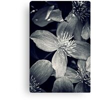 Clematis in Monochrome Canvas Print