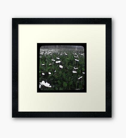 Daisy Ttv  Framed Print
