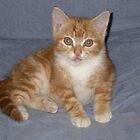 Angus as a Kitten by Andrew Trevor-Jones