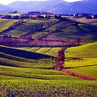 Fields by gluca