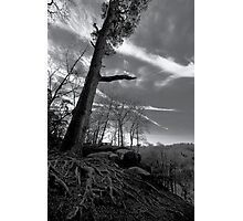 Scraggly Tree Photographic Print