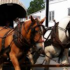 Horses on parade by solareclips~Julie  Alexander