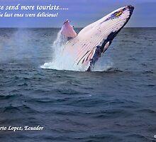 Please Send More Tourists - Humpback Whale by Al Bourassa
