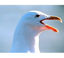 I'm A Legal Seagull Photographic Print