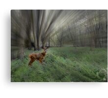 Fawn in the Morning Sunlight Canvas Print