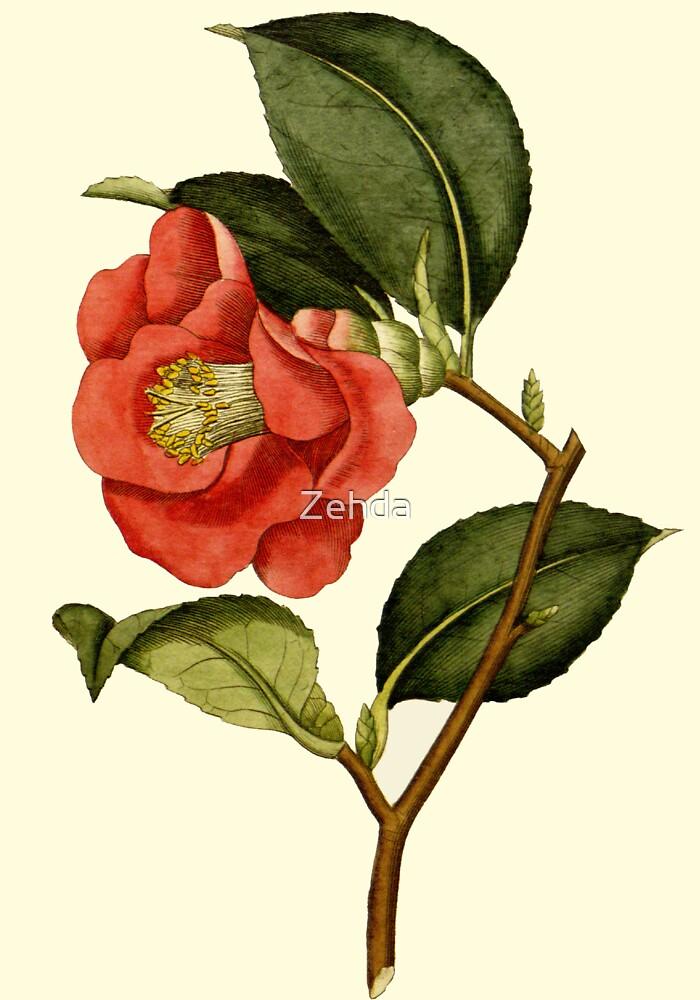 Rose Camellia Flower Botanical by Zehda