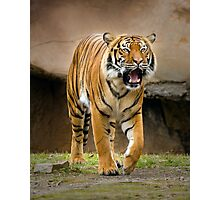 Tigers  Roar Photographic Print