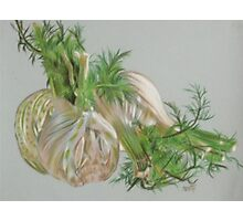 Fennel Photographic Print