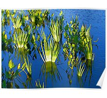 Reeds on Water Poster
