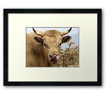 Bull Snot! Framed Print