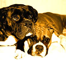 Two boxer friends by ritmoboxers