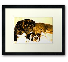 Two boxer friends Framed Print