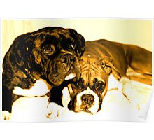 Two boxer friends Poster