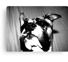 Boxer puppy in black and white Canvas Print