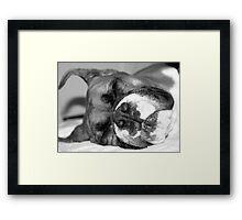 Fawn boxer dog sleeping Framed Print