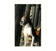Senior Brindle boxer dog Art Print