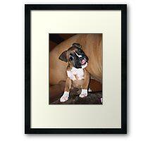 Boxer puppy saying hi Framed Print