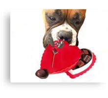 Boxer dog eating chocolates Canvas Print