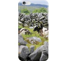 Stone walls and cattle at rest iPhone Case/Skin