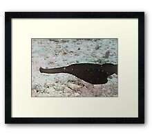 Robust Ghost Pipefish Framed Print