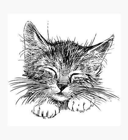 Cat animal Photographic Print