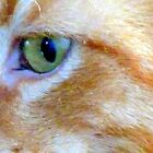 Eye of Felix by HELUA