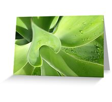 agave > eco green Greeting Card