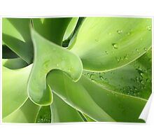 agave > eco green Poster