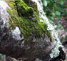 Mossy Tree by Cheryl Parkes