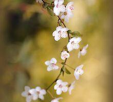 Soft on Spring by Jacky Parker